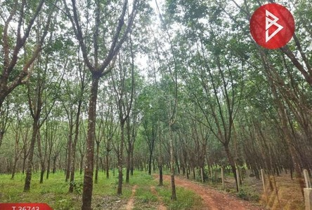 For Sale Land 3,216 sqm in Bueng Kan, Northeast, Thailand