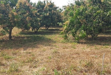 For Sale Land 19,200 sqm in Nong Wua So, Udon Thani, Thailand